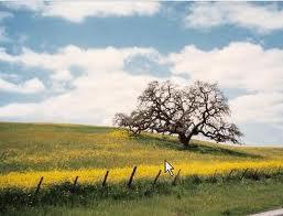 SBC ranchland.jpg