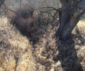 Dry Creek Bed copy.jpg