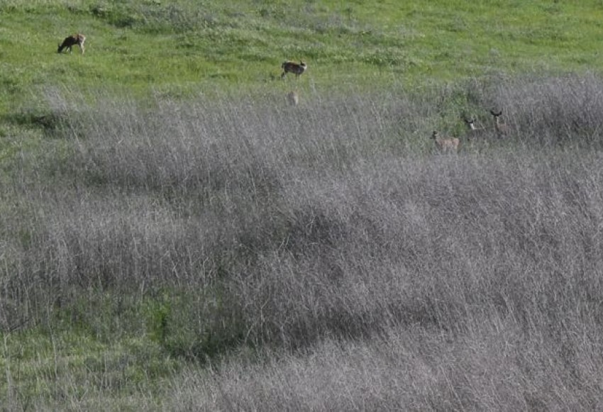 Resident deer at site of Proposed Resource Recovery Park