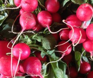 photo of radishes by Bob Reid