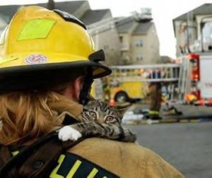 cat rescue.jpg
