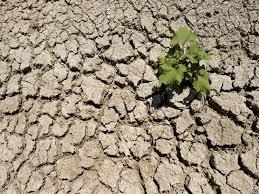 drought ground.jpg