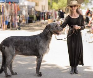 Owner melinda poses with Willem the Irish wolfhound.jpg