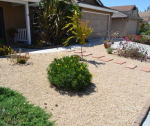 A drought-tolerant replacement for water hungry lawn.