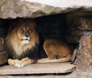 Photo courtesy of /www.laprogressive.com.
