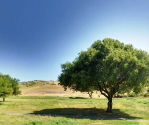 del webb san juan oaks.jpg