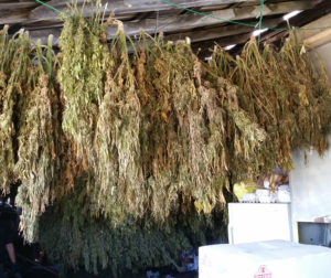 pot drying and hanging.jpg