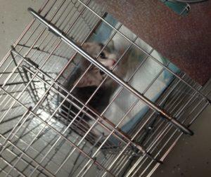 trapped kitten.JPG