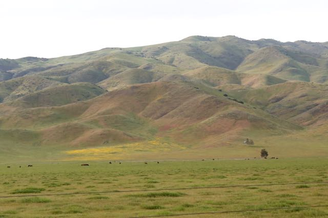 Panoche Valley Spring.jpg
