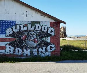 bulldog_boxing_sign2.jpg
