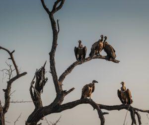 vultures-1081751_960_720.jpg