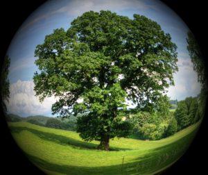 tree in ball.jpg