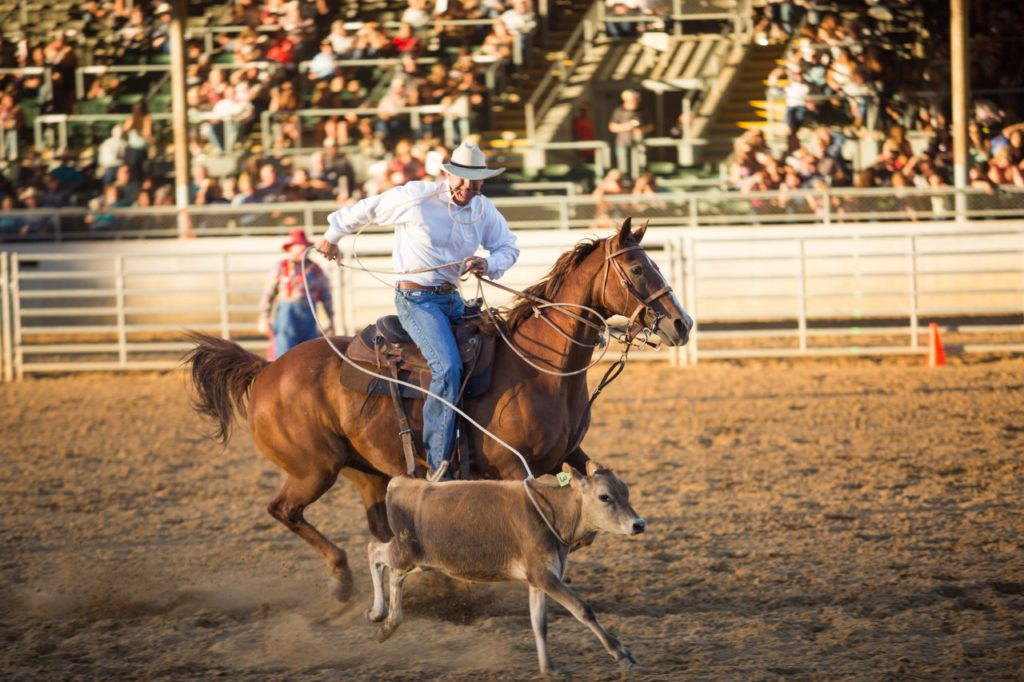 Roping at the San Benito County Saddle Horse Show and Rodeo. Photo by Joshua Miller.