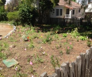The Native Plant Garden at the San Juan Bautista State Historic Park. Photos by Frank Perez.
