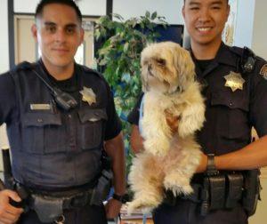 police save dog.jpg