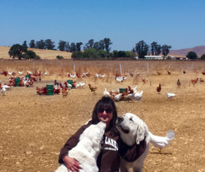 Lisa Knutson at her Pasture Chick Ranch outside Hollister with her dogs, Cooper and Molly.