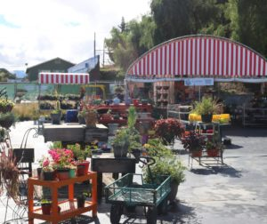 The GardenMart will close over the next few weeks. Photos by John Chadwell.