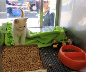 cat for adoption.jpg