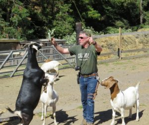 Goats showing food preferences.