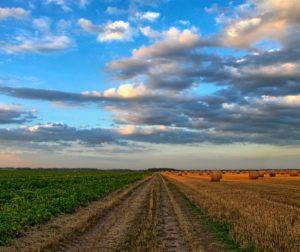 crops.jpg