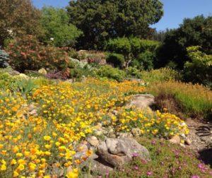 A garden on the Aromas Hills Artisans Garden Tour.