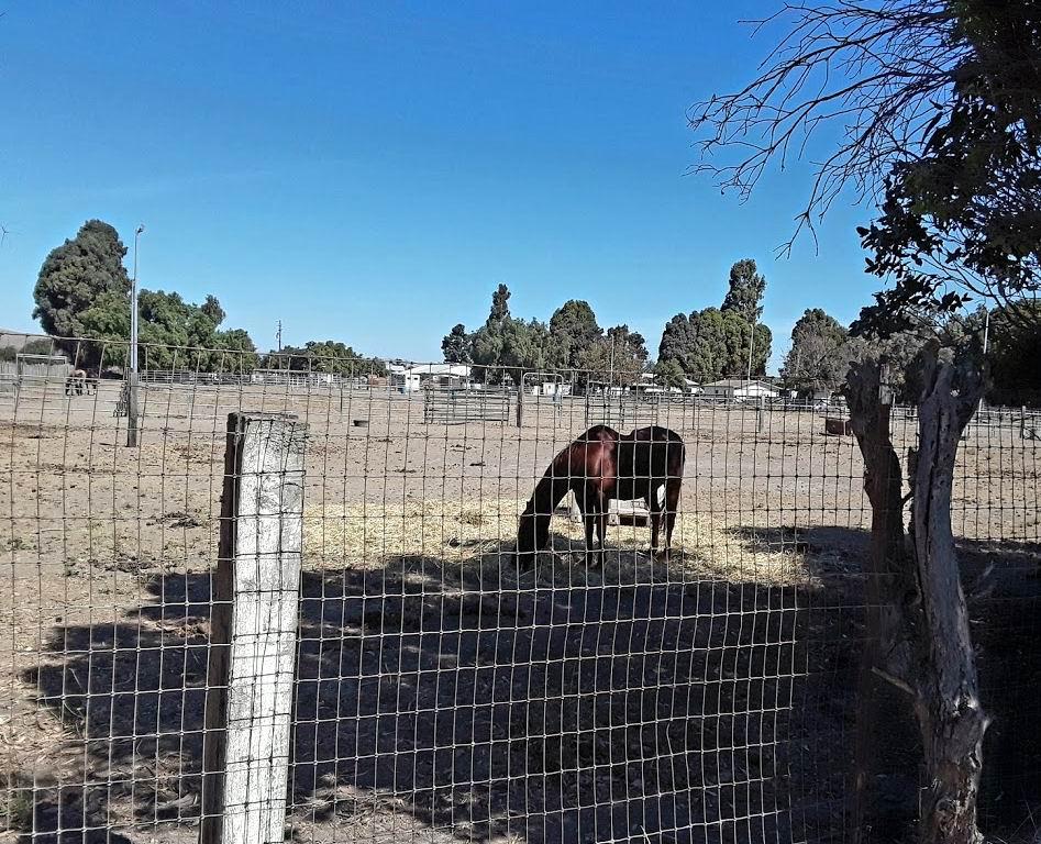 Freitas horse.jpg