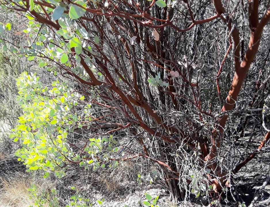 Manzanita Short Fence.jpg