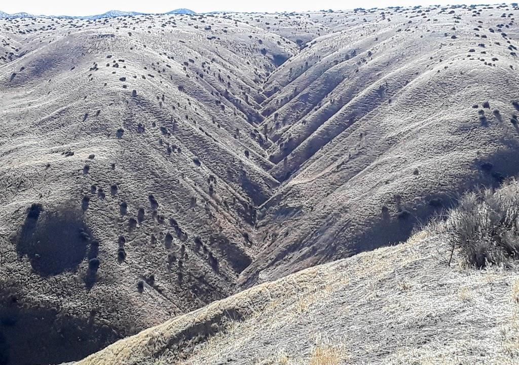Panoche Hills 10.jpg