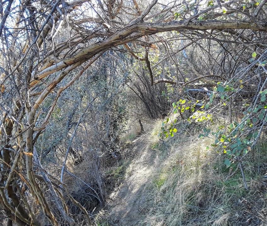 Short Fence Trail 6.jpg
