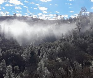 Early morning fogbank in the Laguna Creek Gorge. Photo by Jim Ostdick.