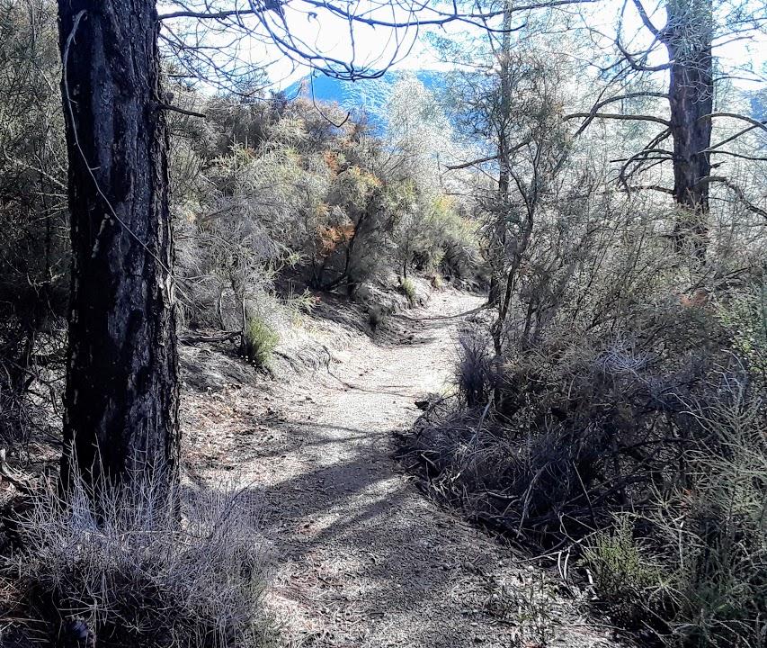 laguna mtn trail.jpg