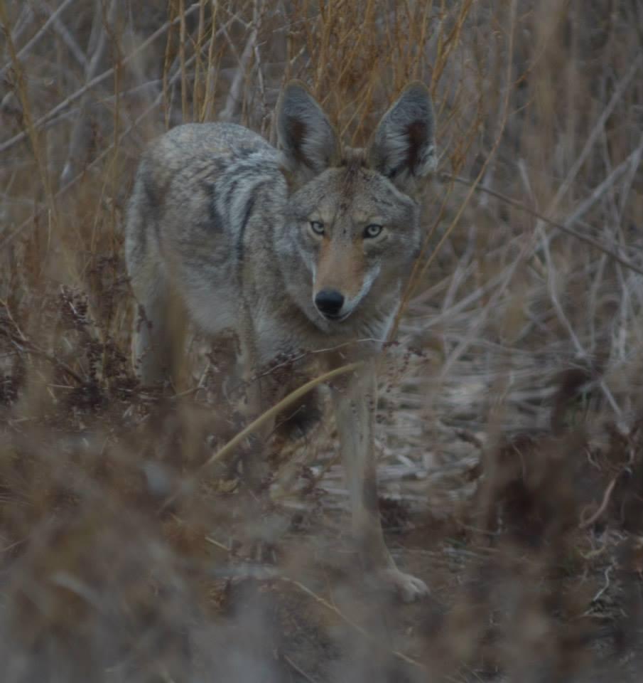 Wildlife Reproductive Season. Photo by Carmel de Bertaut