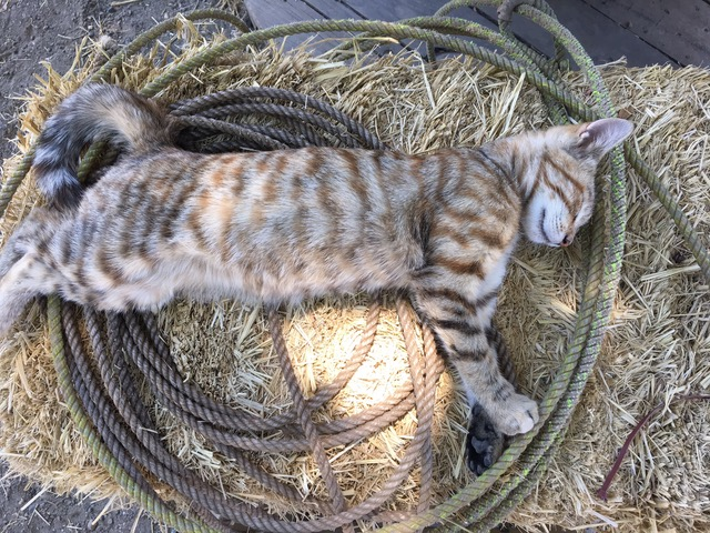 Cat Sleeping.jpeg