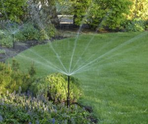Smaller turf areas with drought tolerant planst and rotating, low-volume sprinkler.