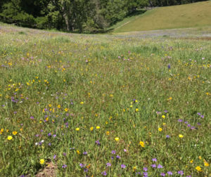 A pasture displays a wide array of spring flowers. (Click to see full show.) Photo by Bob Rowlands.