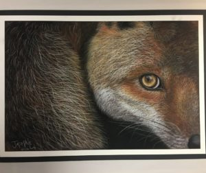 """""""Wary,"""" a pastel and charcoal piece by SBHS senior Jasmine Ulloa, was the winner of the Congressional Art Contest."""