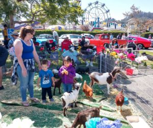 Fun at the petting zoo on Aromas Day. Photo by Carmel de Bertaut.