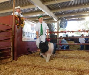 4-H and FFA members sold their animals on Oct. 6 during the Junior Livestock Auction at the San Benito County Fair. Photo by Blaire Strohn.
