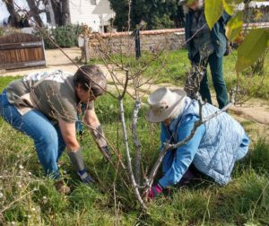 Master gardeners Dawn Avery and Elizabeth Burns demonstrated pruning and cleaning around roses at a Jan. 26 workshop in San Juan Bautista. Photo by Carmel de Bertaut.