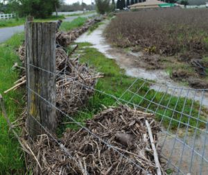 Flooding along Pacheco Creek broke fences along Lovers Lane in 2017. File photo by Julie Morris.