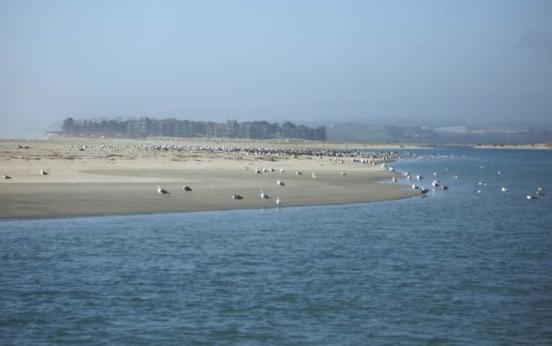 The mouth of today's Pajaro River. Photo by Jim Ostdick.