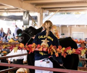 FFA member Sara Brewen sells her grand champion steer at the 2018 San Benito County Fair. Photo courtesy of San Benito County Fair.