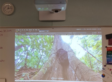A video of a termite nest observed by students with the new projector. Photo provided by Chamberlain's.