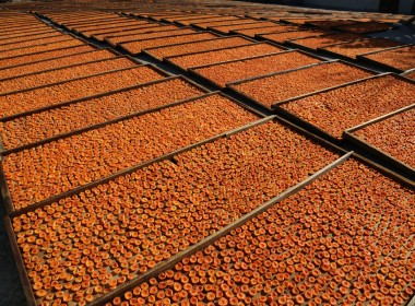 Ripe apricots dry in huge trays. B&R Farms produces packages of dried apricots, sauces, jams and chocolate covered apricots. Photo by Leslie David.