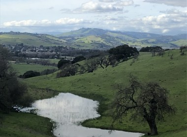 Meat from well-managed cows produces landscapes like this one on California's central coast. Deep-rooted perennial grasses and and oak trees capture and hold water and carbon in the soil. Photo provided.