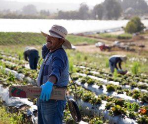 JSM Organics grows organic produce and flowers. Photos courtesy of JSM Organics.