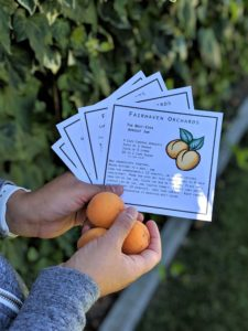 "For people hoping to create a jam with fresh fruit, Fairhaven Orchards provides a recipe for ""The Best-Ever Apricot Jam"". Photo by Becky Bonner."