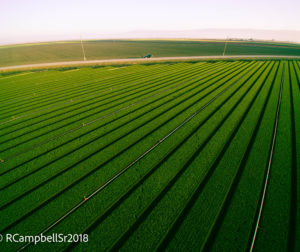 The beauty of San Benito County agriculture can be seen from above. Photo by Ryan Campbell..