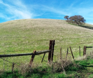 The Cook Ranch in Tres Pinos is one of six agricultural conservation easements held by SBALT. Photo provided.