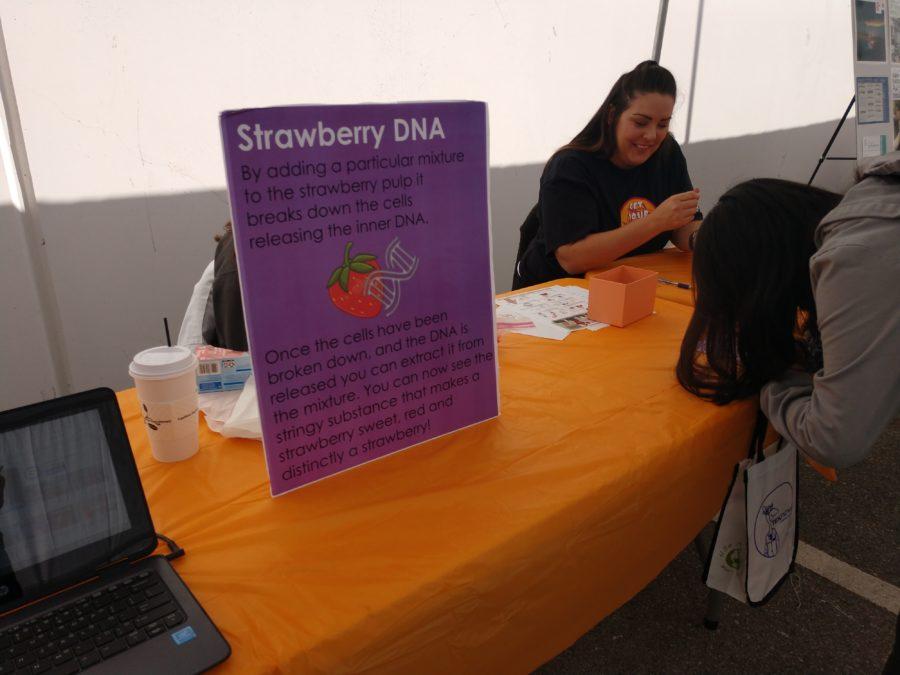 DNA extraction. Photo by Carmel de Bertaut.